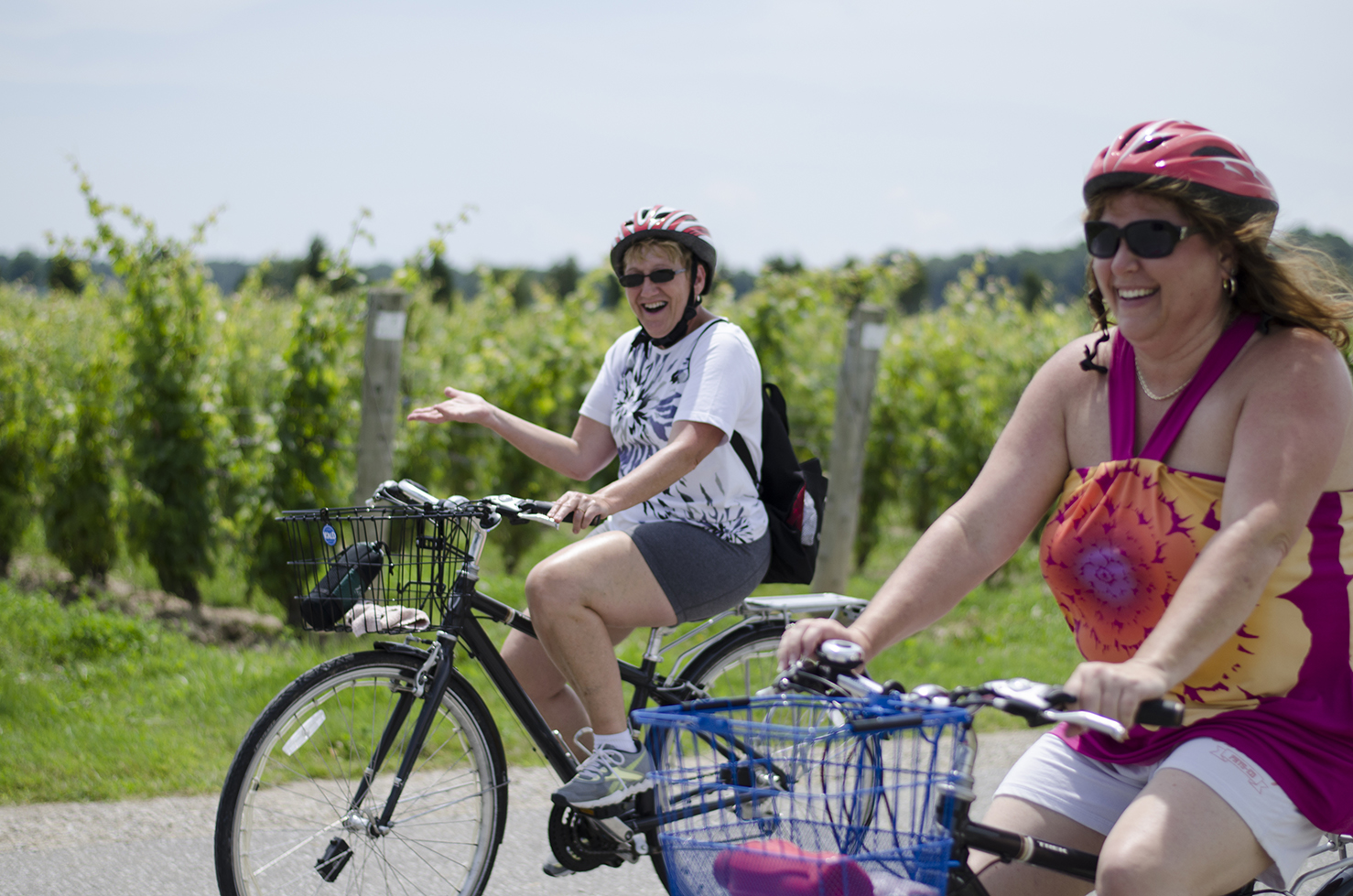 A leisurely roll on the Wine Trail Ride bike tour.