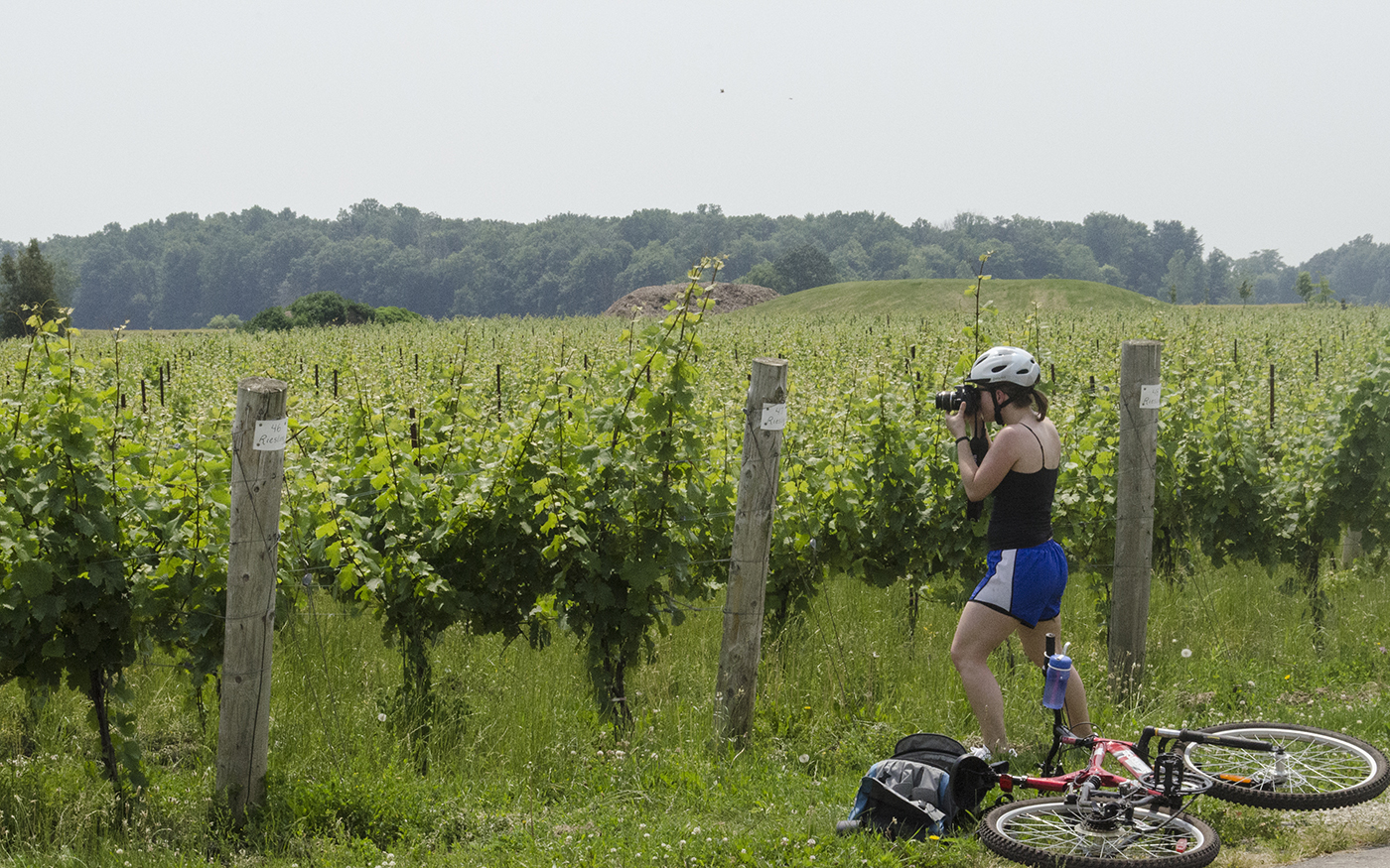 A cyclist takes a stop to photograph the scenery on a Wine Trail Ride cycling tour through the Lake Erie North Shore.