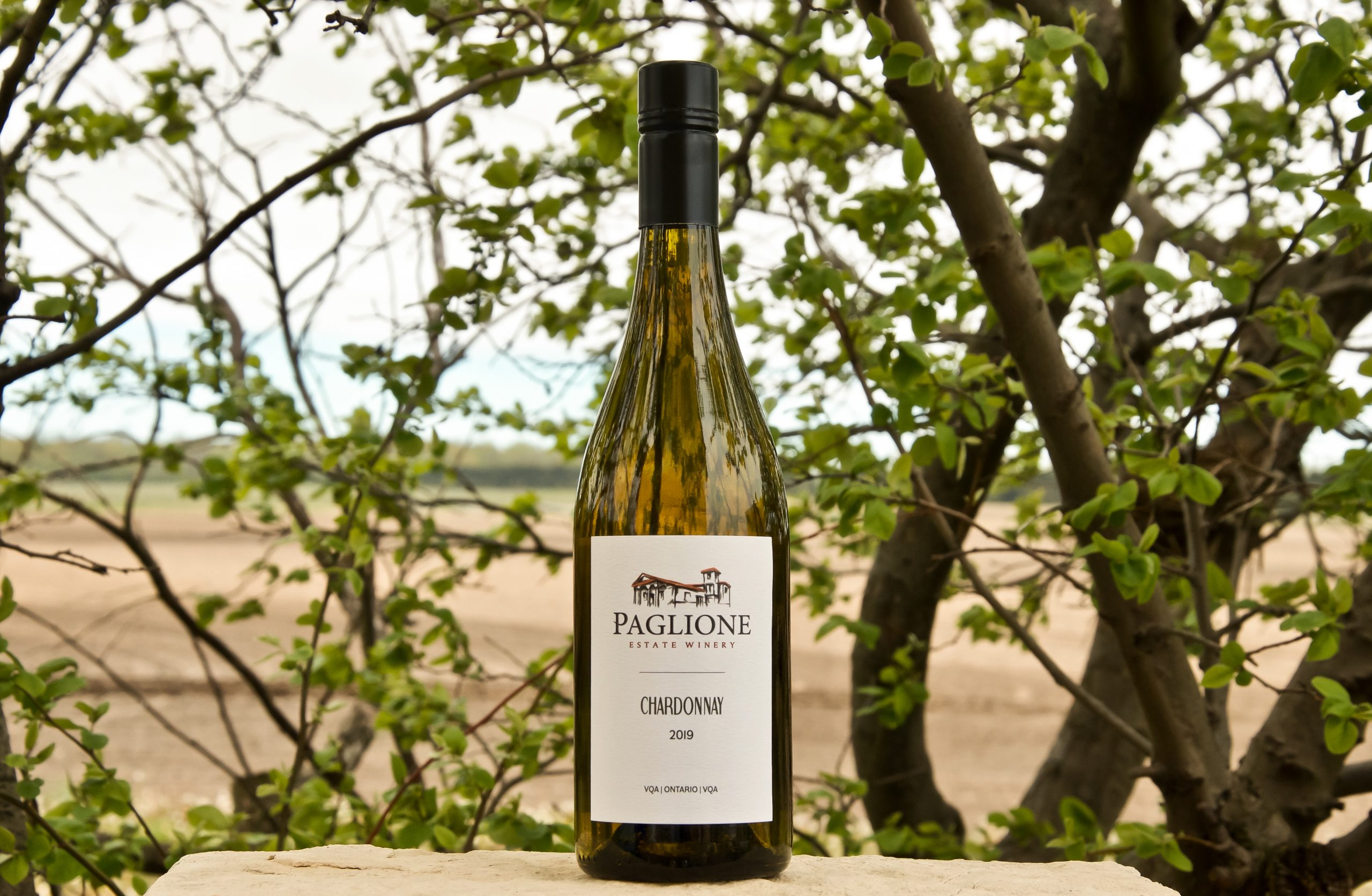 The 2019 Chardonnay from Paglione Estate Winery in Essex, Ontario.